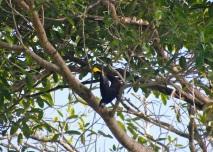 Upside down calling bird!!!