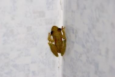 Shower frog....aka voyeur...ha!