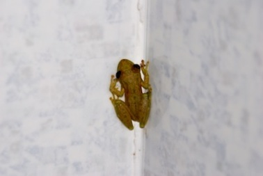 Shower frog....aka voyeur...ha!