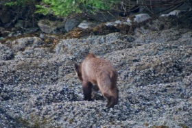 First grizzly sighting!