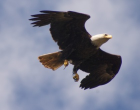 An eagle flew right over my kayak as he swooped down to catch a fish!