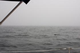 Fog...I hate fog...