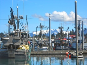 The fishing fleet in Petersburg with the LeConte Glacier in the background