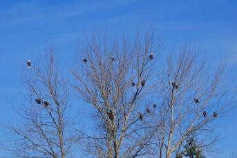 More eagles!