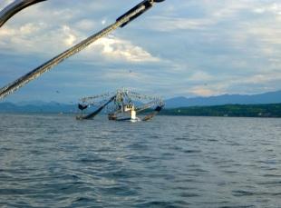 Fishing boat, aka pelican heaven