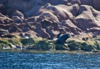 Sea lions on Los Islotes