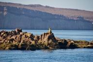 Watchman on Los Islotes