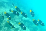 Some of my underwater friends
