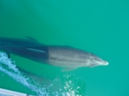 Small pod of dolphins joined us as we left Bahia Conception