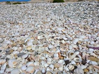 Bazillions of shells