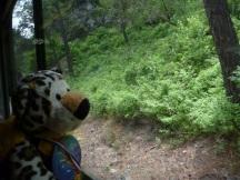 Vaca watching for vacas