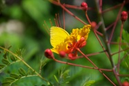 Yellow butterflies everywhere!