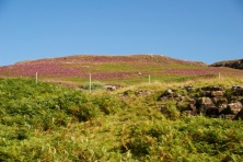 Beautiful heather covered hillsides