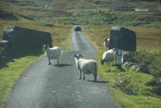 Scottish road block
