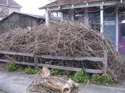 Bye bye wisteria!