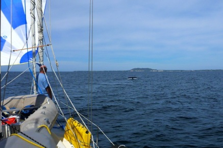 Sailing with the whales..