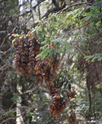 Butterfly nests