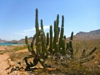 Beautiful crazy cacti!