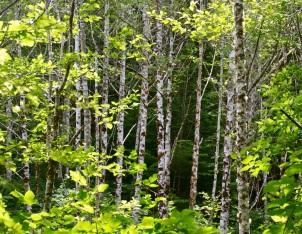 Trail sights