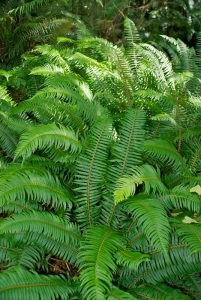 I love ferns