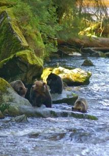 Walking up the creek