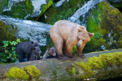 Momma and cubs