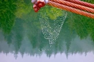 A little rain in the web