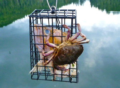 Our last crabbing attempt....this one's NOT a keeper!