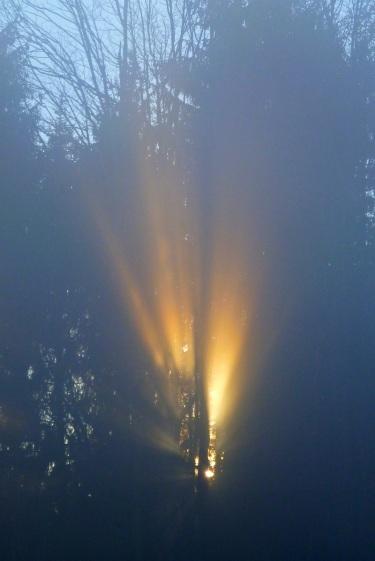Sunlight through fog