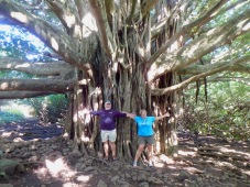 Big Banyan on the trail