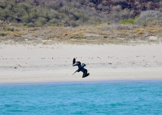 Pelican brekkie
