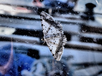 A winged stowaway