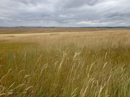 The grasslands around Little Bighorn