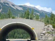 Love these wildlife bridges!