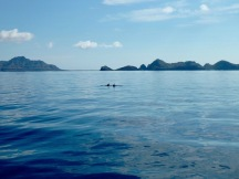 Dolphins swimming along side