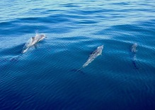 Thankful for dolphins..
