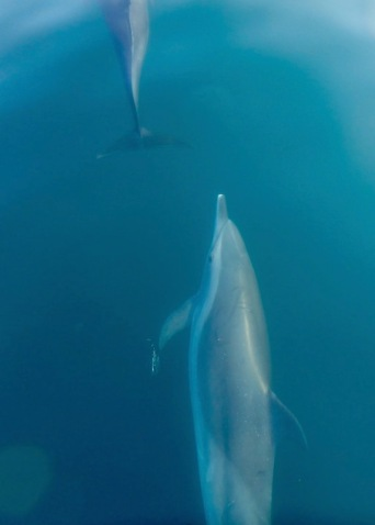 Beautiful dolphins