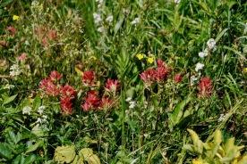 Wildflower WOW
