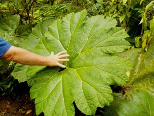 Big leaves!!